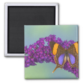 Sammamish Washington Photograph of Butterfly 27 Square Magnet