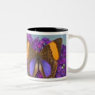 Sammamish Washington Photograph of Butterfly 27 Two-Tone Coffee Mug
