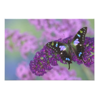 Sammamish Washington Photograph of Butterfly 28