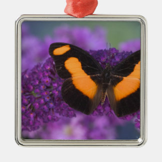 Sammamish Washington Photograph of Butterfly 28 Christmas Ornament