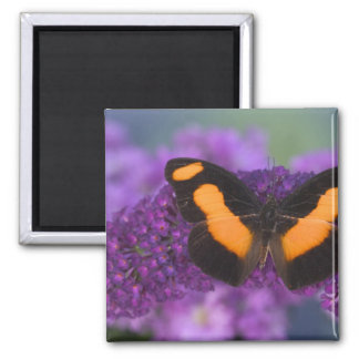 Sammamish Washington Photograph of Butterfly 28 Magnet