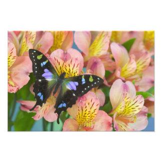 Sammamish Washington Photograph of Butterfly 29