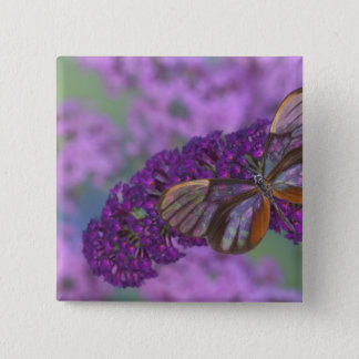 Sammamish Washington Photograph of Butterfly 29 15 Cm Square Badge