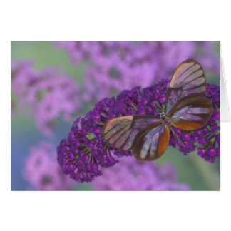 Sammamish Washington Photograph of Butterfly 29 Card
