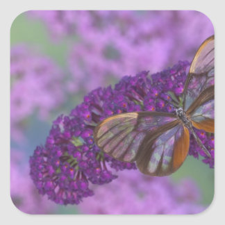 Sammamish Washington Photograph of Butterfly 29 Square Sticker