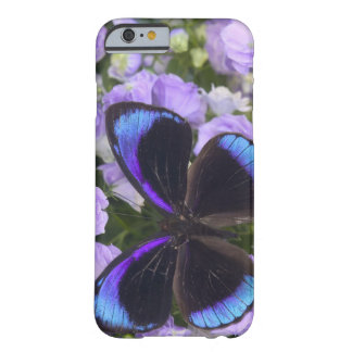 Sammamish Washington Photograph of Butterfly 2 Barely There iPhone 6 Case