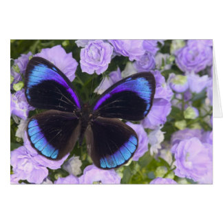 Sammamish Washington Photograph of Butterfly 2 Card