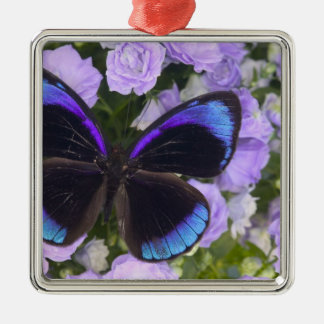 Sammamish Washington Photograph of Butterfly 2 Christmas Ornament