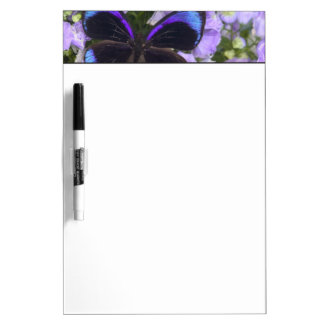 Sammamish Washington Photograph of Butterfly 2 Dry Erase Board