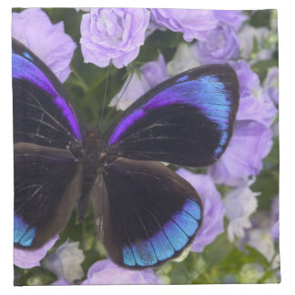 Sammamish Washington Photograph of Butterfly 2 Napkin