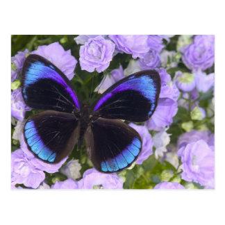 Sammamish Washington Photograph of Butterfly 2 Postcard