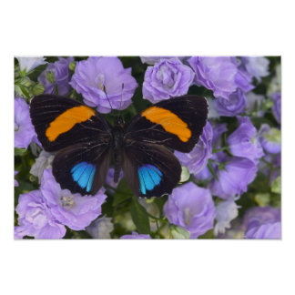 Sammamish Washington Photograph of Butterfly 2 Poster