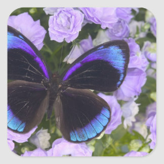 Sammamish Washington Photograph of Butterfly 2 Square Sticker