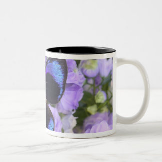 Sammamish Washington Photograph of Butterfly 2 Two-Tone Coffee Mug