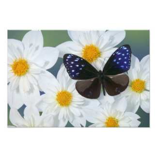Sammamish Washington Photograph of Butterfly 30