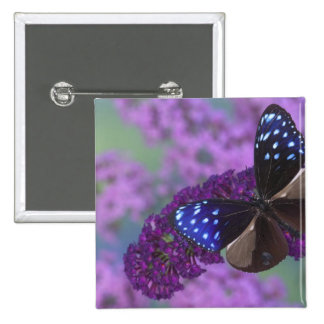 Sammamish Washington Photograph of Butterfly 30 15 Cm Square Badge