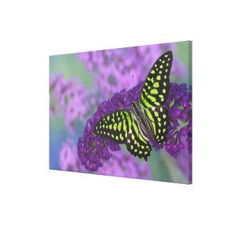 Sammamish Washington Photograph of Butterfly 30 Canvas Print