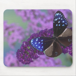 Sammamish Washington Photograph of Butterfly 30 Mouse Mat
