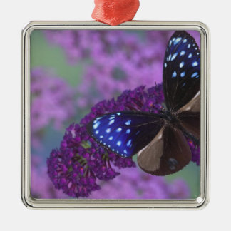 Sammamish Washington Photograph of Butterfly 30 Silver-Colored Square Decoration