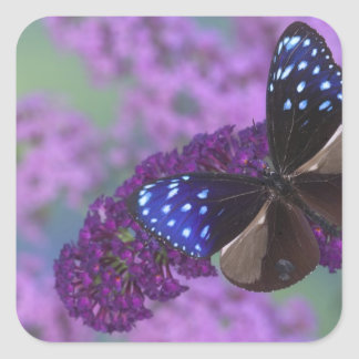Sammamish Washington Photograph of Butterfly 30 Square Sticker