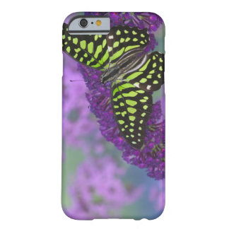 Sammamish Washington Photograph of Butterfly 31 Barely There iPhone 6 Case