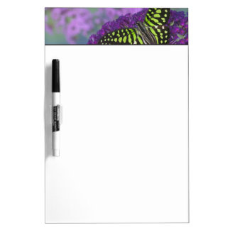 Sammamish Washington Photograph of Butterfly 31 Dry Erase Board