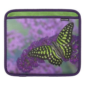 Sammamish Washington Photograph of Butterfly 31 iPad Sleeve