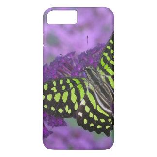 Sammamish Washington Photograph of Butterfly 31 iPhone 8 Plus/7 Plus Case