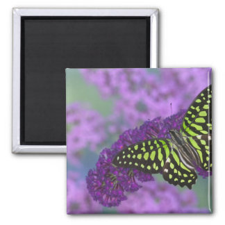 Sammamish Washington Photograph of Butterfly 31 Magnet