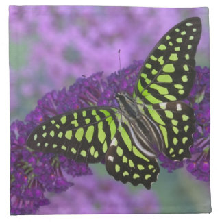Sammamish Washington Photograph of Butterfly 31 Napkin