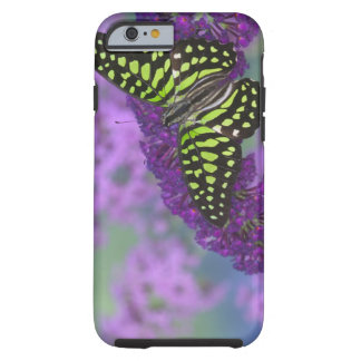 Sammamish Washington Photograph of Butterfly 31 Tough iPhone 6 Case