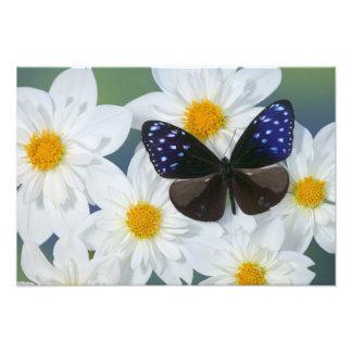 Sammamish Washington Photograph of Butterfly 32