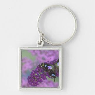 Sammamish Washington Photograph of Butterfly 32 Key Ring