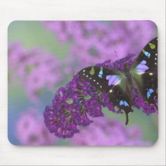 Sammamish Washington Photograph of Butterfly 32 Mouse Mat