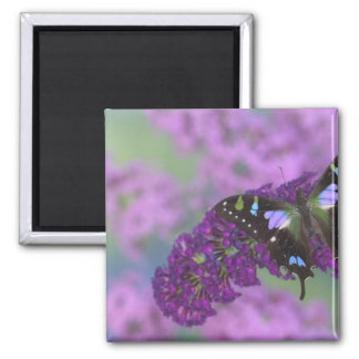 Sammamish Washington Photograph of Butterfly 32 Square Magnet