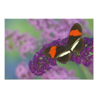 Sammamish Washington Photograph of Butterfly 33