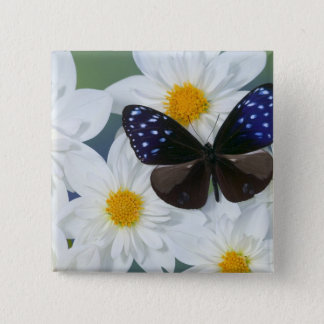 Sammamish Washington Photograph of Butterfly 33 15 Cm Square Badge