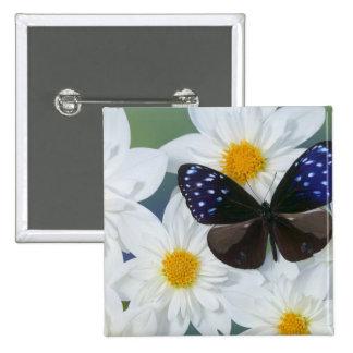 Sammamish Washington Photograph of Butterfly 33 15 Cm Square Badge