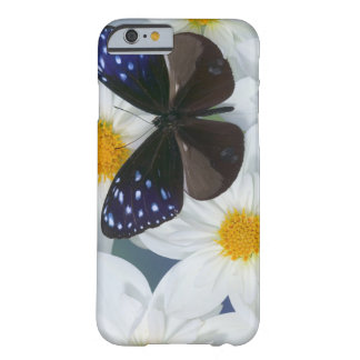 Sammamish Washington Photograph of Butterfly 33 Barely There iPhone 6 Case