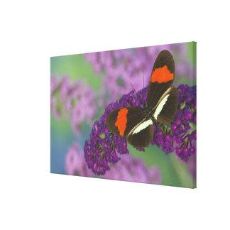 Sammamish Washington Photograph of Butterfly 33 Canvas Print