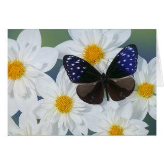 Sammamish Washington Photograph of Butterfly 33 Card