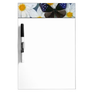 Sammamish Washington Photograph of Butterfly 33 Dry Erase Board