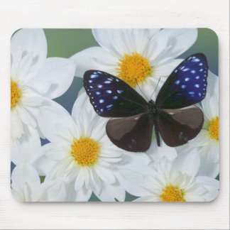 Sammamish Washington Photograph of Butterfly 33 Mouse Mat