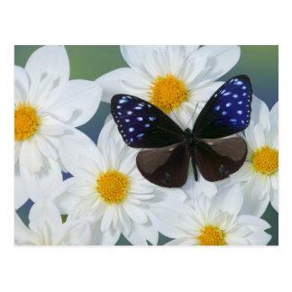 Sammamish Washington Photograph of Butterfly 33 Postcard