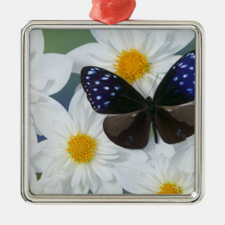 Sammamish Washington Photograph of Butterfly 33 Silver-Colored Square Decoration