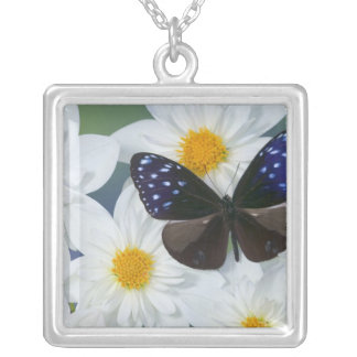 Sammamish Washington Photograph of Butterfly 33 Silver Plated Necklace