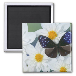 Sammamish Washington Photograph of Butterfly 33 Square Magnet