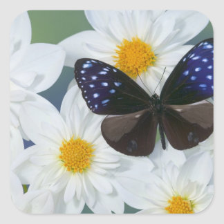 Sammamish Washington Photograph of Butterfly 33 Square Sticker
