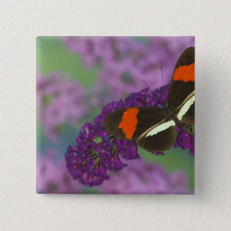 Sammamish Washington Photograph of Butterfly 34 15 Cm Square Badge