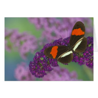 Sammamish Washington Photograph of Butterfly 34 Card
